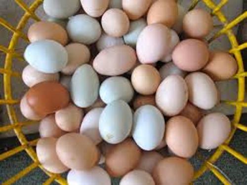 Chicken Eggs Image