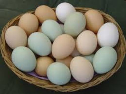 Chicken Eggs Pictures