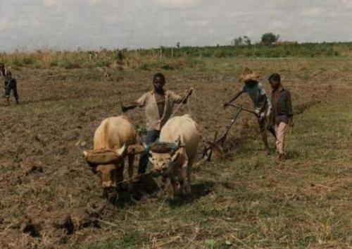 Child Labour in Africa Pic