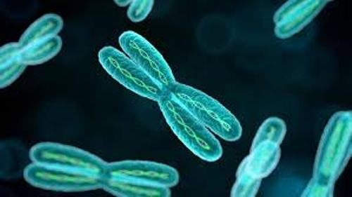 Facts about Chromosomes