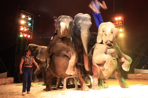 Facts about Circuses