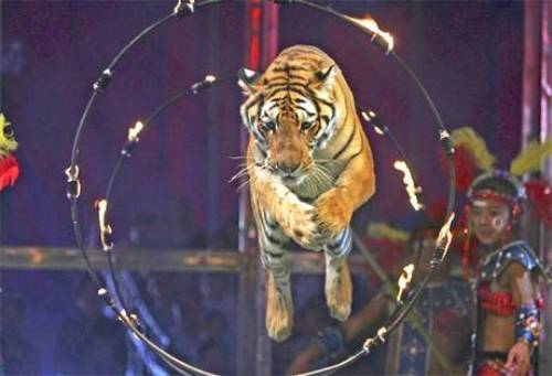 10 Facts About Circuses Fact File