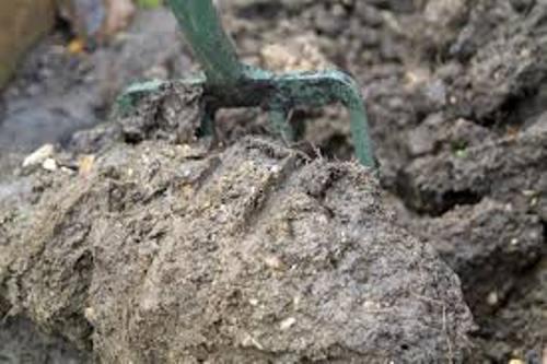 Clay Soil Texture
