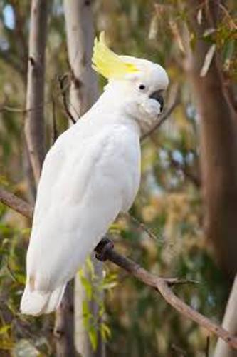10 Facts about Cockatoos | Fact File