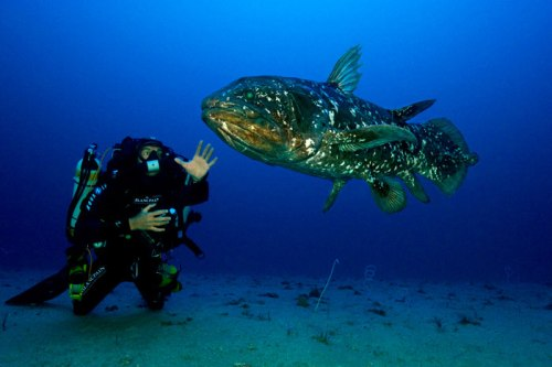 Coelacanth Pic