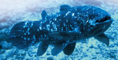 Coelacanth Pictures