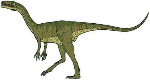 Coelophysis Picture