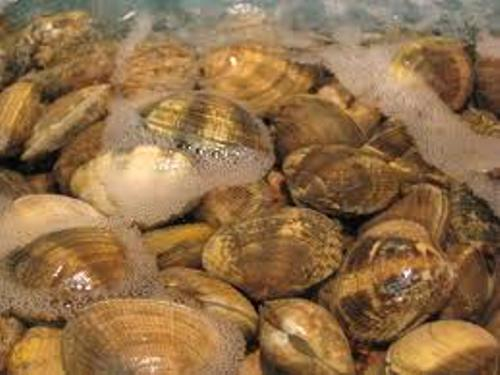 Facts about Clams