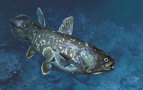 Facts about Coelacanth