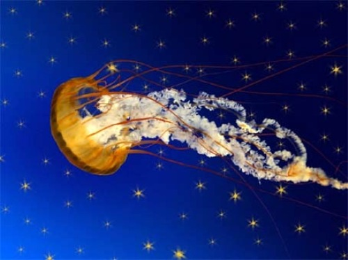 Facts about Coelenterates