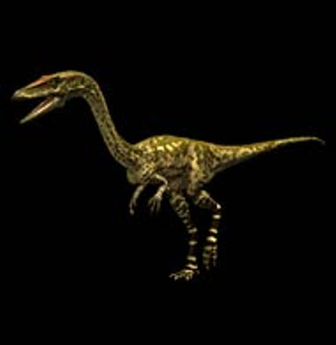 Facts about Coelophysis