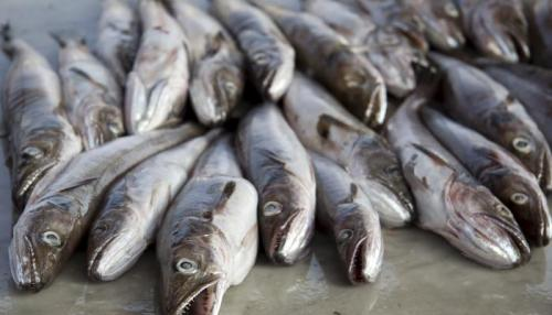 facts about Cod Fish