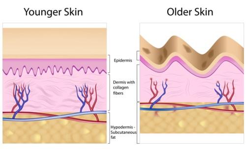 Collagen Facts