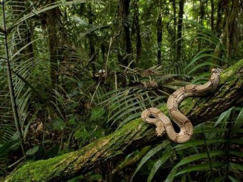 Congo Rainforest Facts