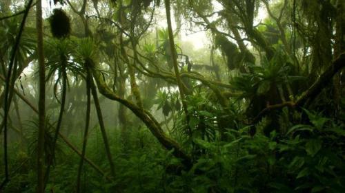 Congo Rainforest Pic