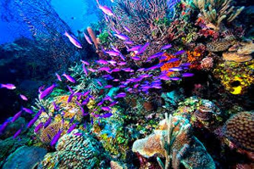 Coral Reef Beauty