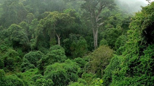 Facts about Congo Rainforest