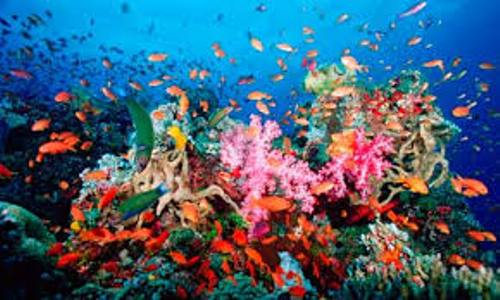 Facts about Coral Reefs
