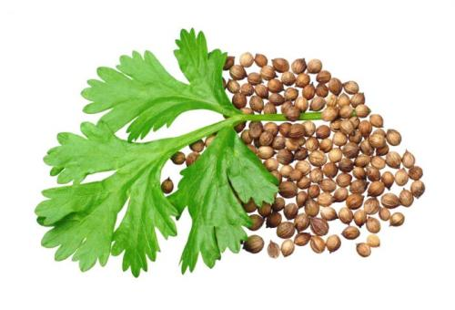 Facts about Coriander