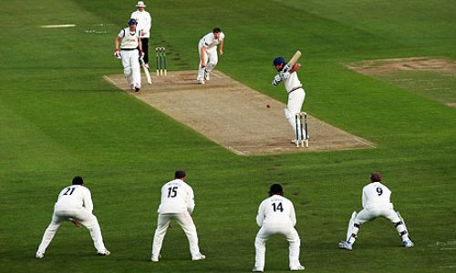 Cricket Pic