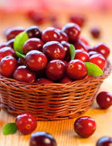 Facts about Cranberries
