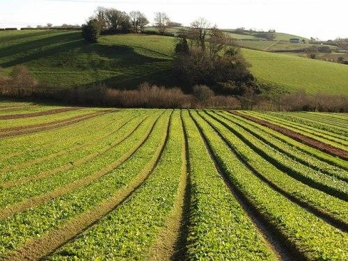 Crop Pictures