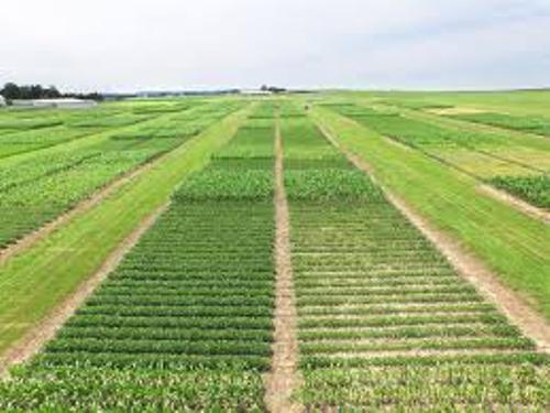 Crop Rotation Image