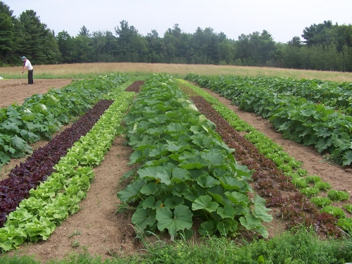 Crop Rotation Pictures