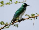 10 Facts about Cuckoos