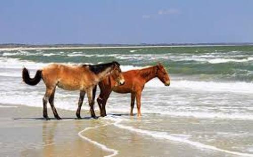 Cumberland Island Horses