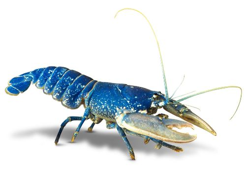 Facts about Crustaceans