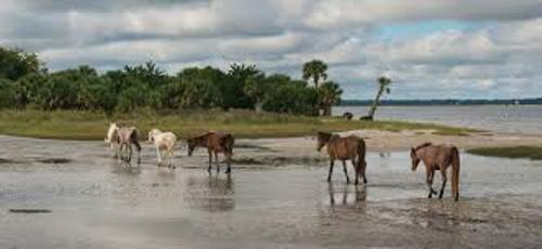Facts about Cumberland Island