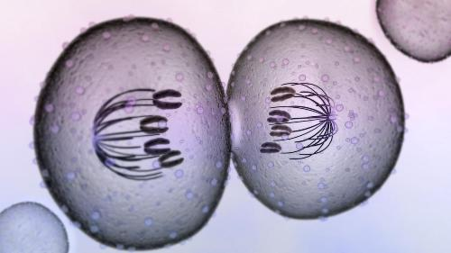 Cytokinesis Pic