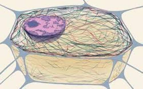 Cytoskeleton Images