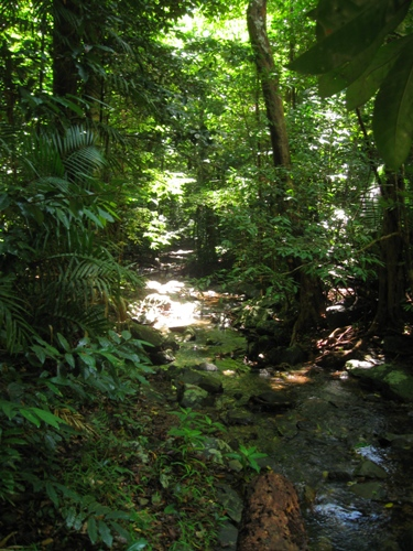 Daintree Rainforest Images