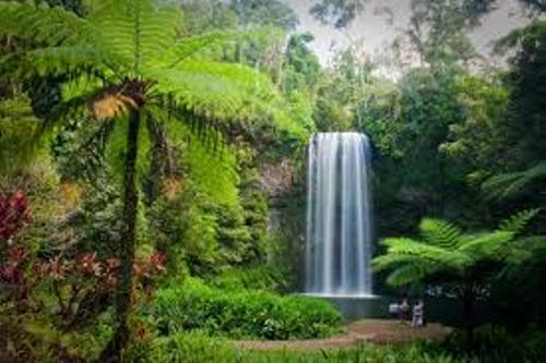 Daintree Rainforest Pic