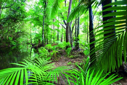 Facts about Daintree Rainforest