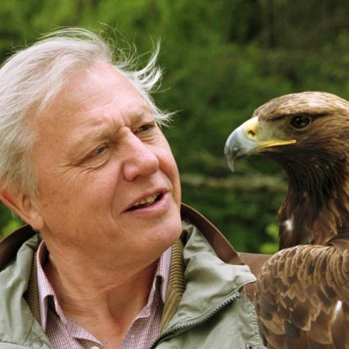 David Attenborough Facts