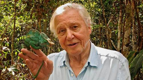 David Attenborough Pic