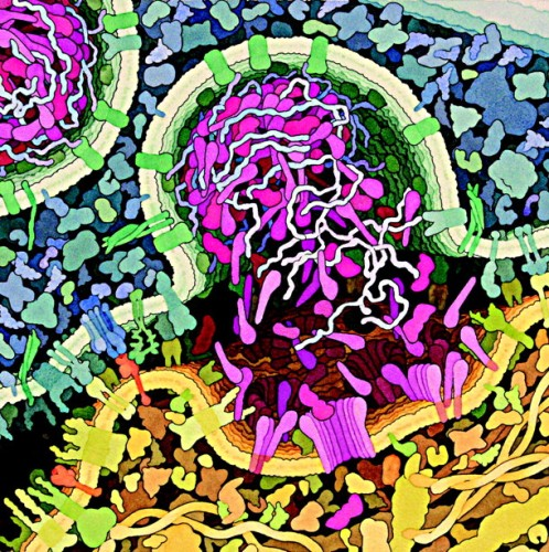 David Goodsell Picture