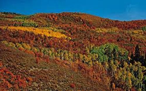 Deciduous Forest Facts