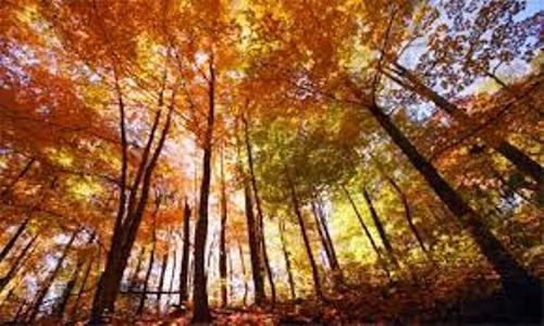 Deciduous Forest Pictures