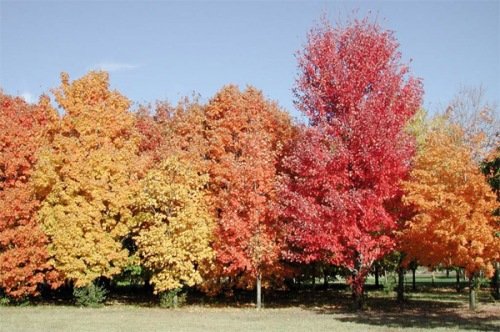 Deciduous Trees Facts