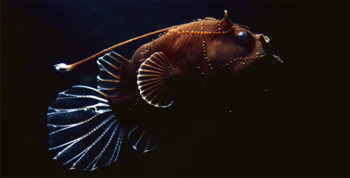 Deep Sea Creatures Pic
