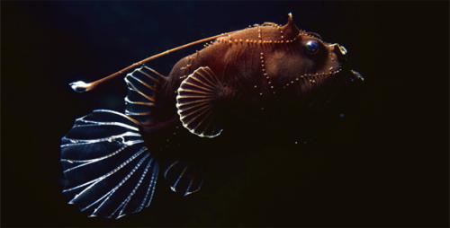 Deep Sea Creatures Pic