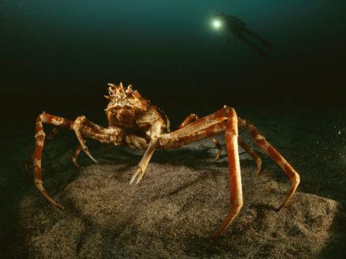 Deep Sea Creatures Pictures
