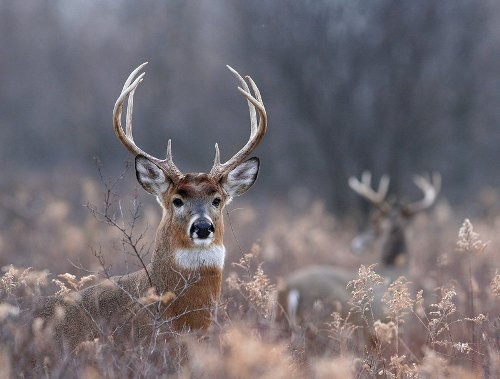 Deer Hunting Images
