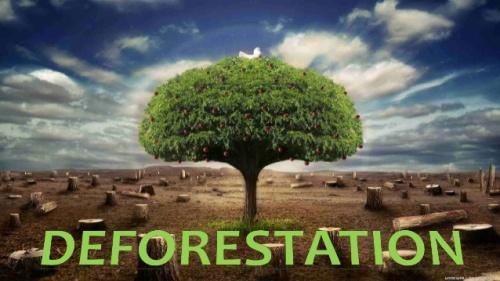 Deforestation Pic