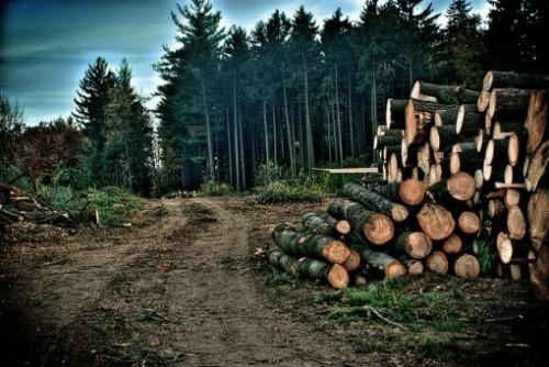 Deforestation Pictures