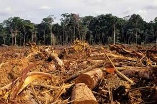 Deforestation in The Amazon Rainforest Brazil